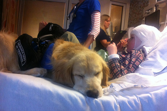 How Seizure Dogs Help People with Epilepsy Live Better - Hop